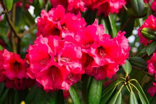फूल देइ-छम्मा देइ फेस्टिवल क्यों मनाया जाता है | Phool dei festival in Hindi